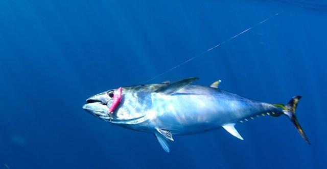 2021 Simrad Victorian Tuna Classic August 21st